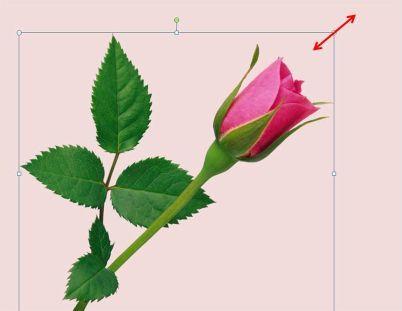 Как сделать фотографии одного размера в powerpoint?